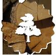 logo arbre avec fond tronc d'arbre